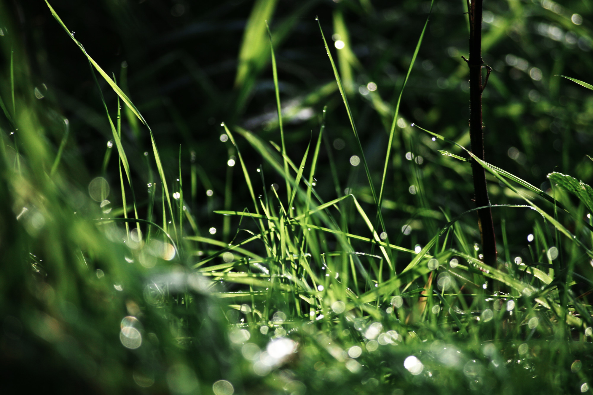 stockvault-rainy-grass106382-e1422884433739